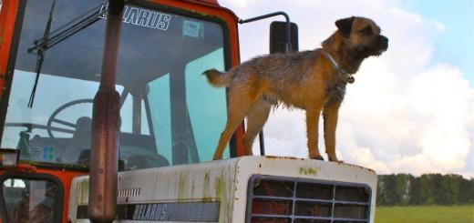 Leo tractor